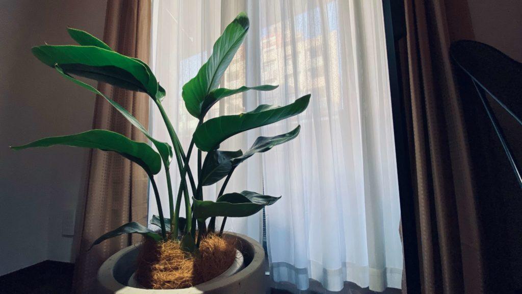観葉植物アップ