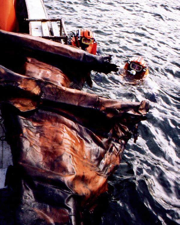海から引き上げられているロシアンカーフ