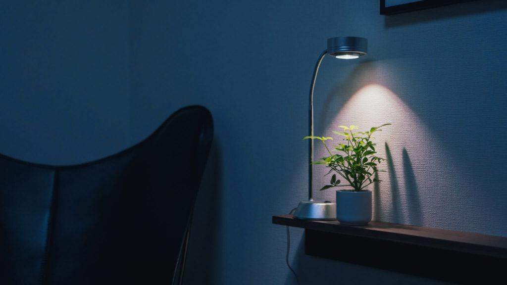 植物育成ライトとシェフレラ