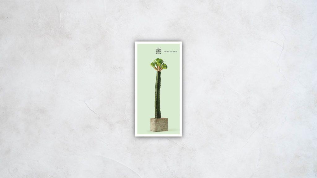 叢 小田康平の多肉植物