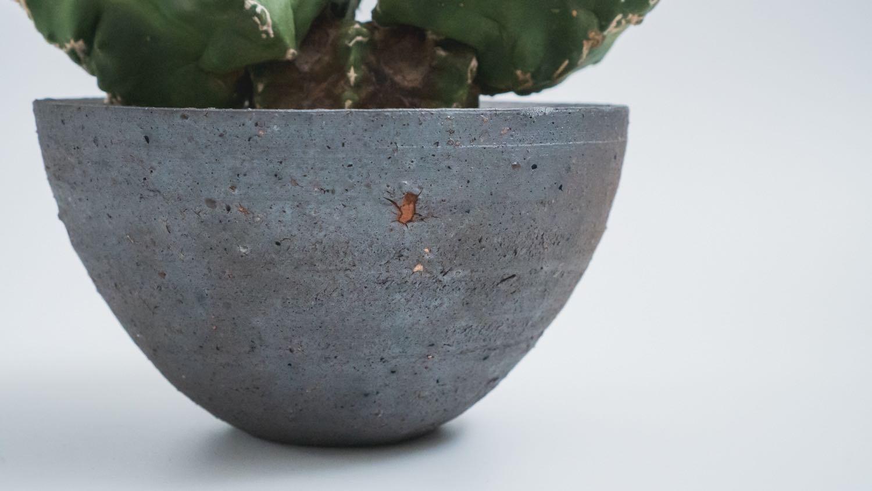 アストロフィツム 亀甲碧鸞 鉢