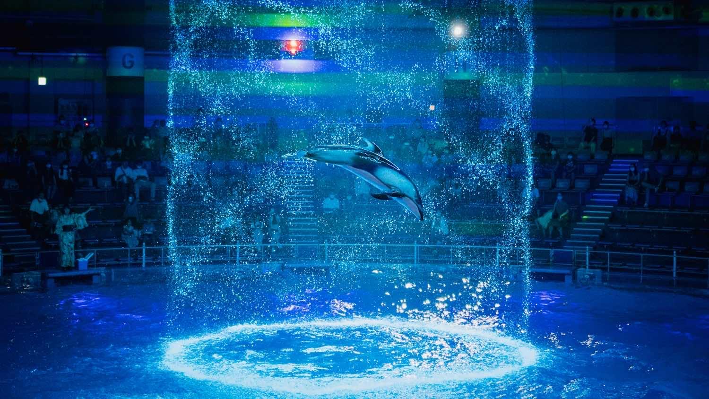 プールのイルカ1